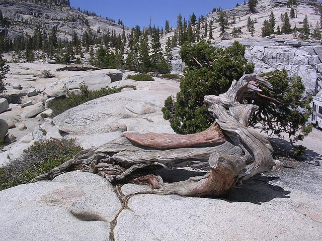 auch der Baum lebt!