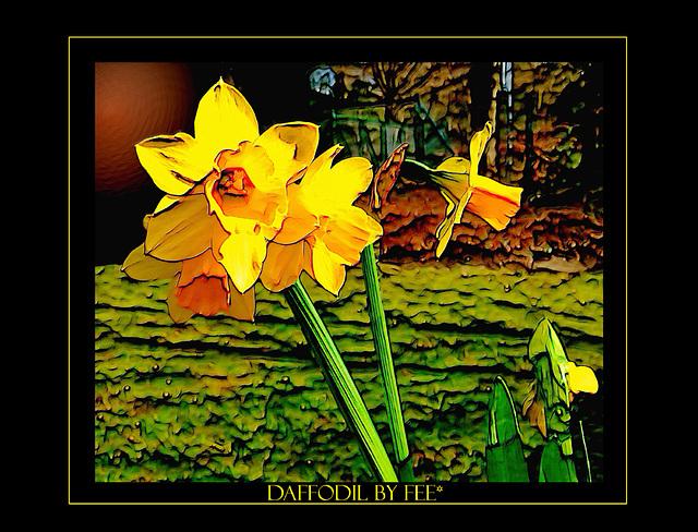 Daffodil...