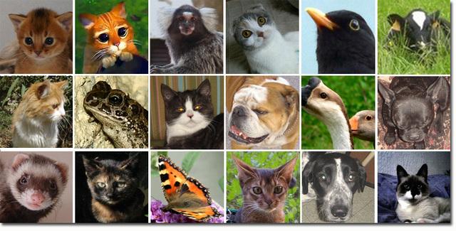 Les animaux sur ipernity