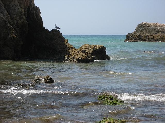 Algarve, Praia da Rocha, seagull