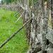 Schöner Zaun