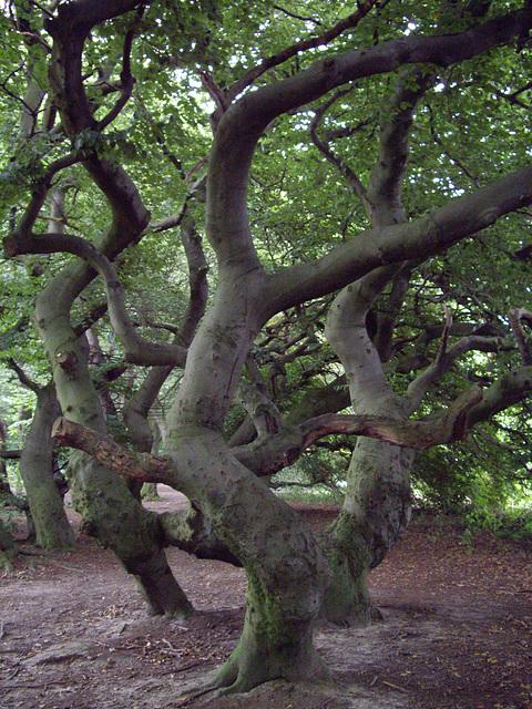 Süntelburchen im Kurpark von Bad Nenndorf