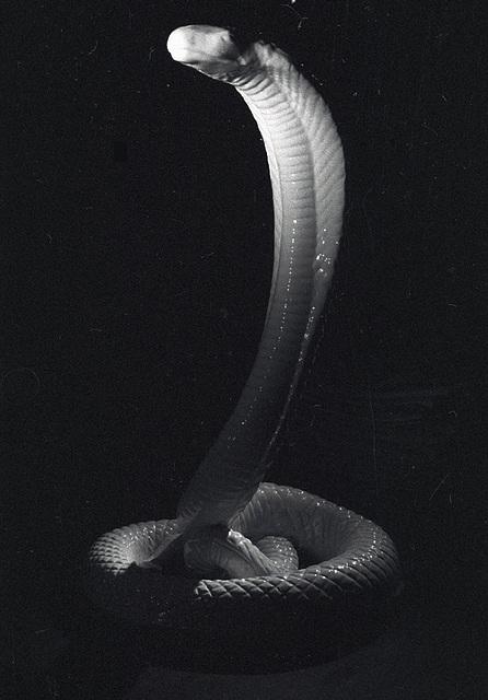 schlange1