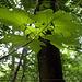 Das Licht des Waldes...