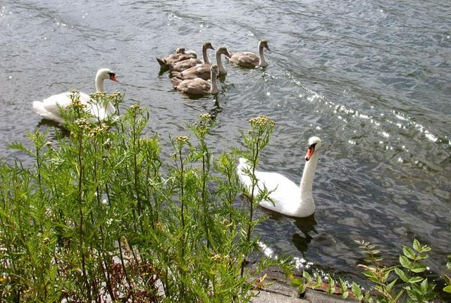 Familienausflug im NO-Kanal