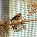 My lovely bird *Amelie*