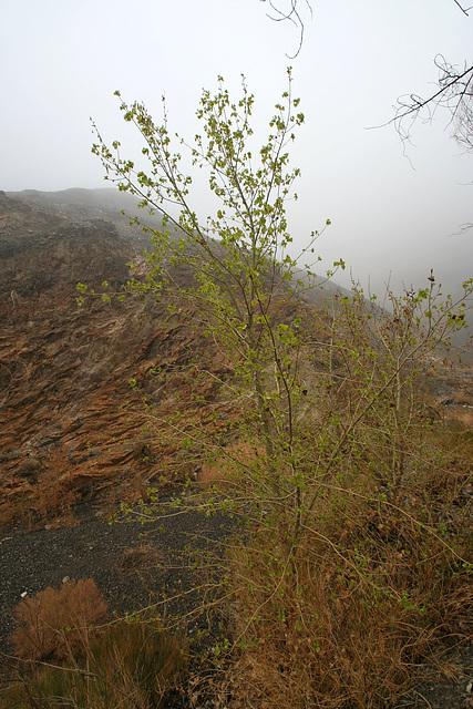 Surprise Canyon (9577)