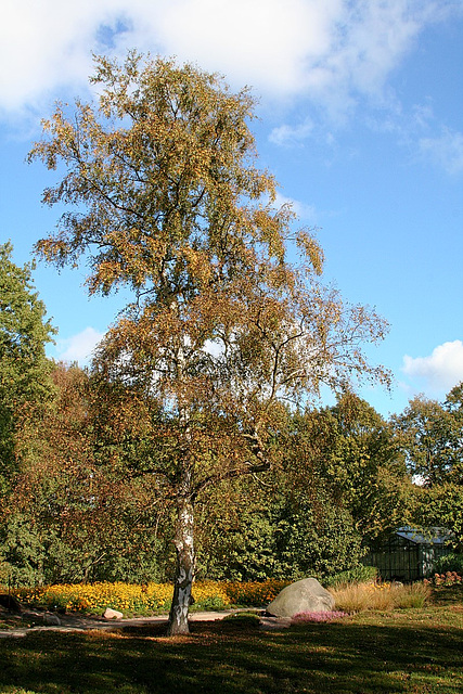 Herbst/Autumn