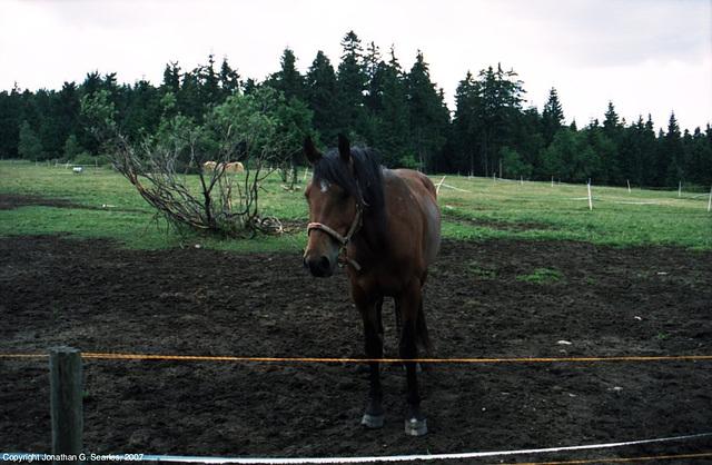 Horse, Prezidenska Chata, Bedrichov, Liberecky Kraj, Bohemia(CZ), 2007
