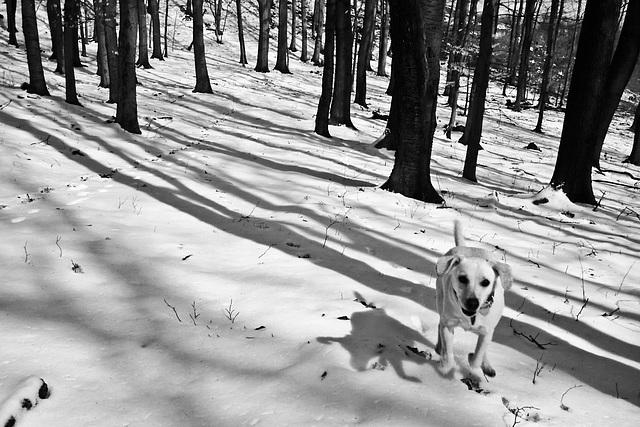Buchta, stromy, tiene / Dog, trees, shadows