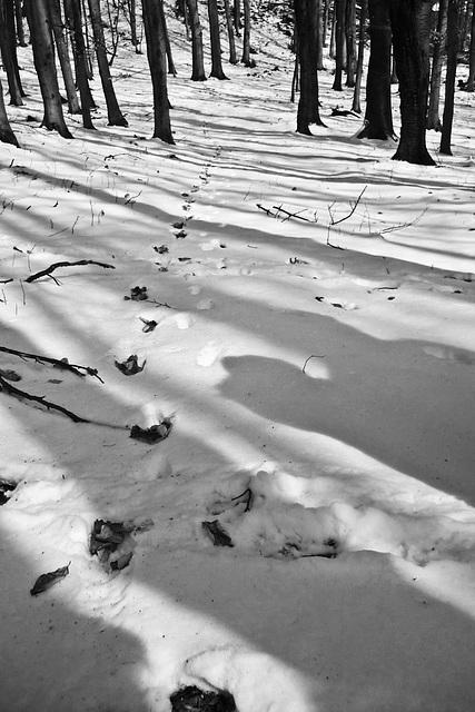 Zimné čáry / Winter lines