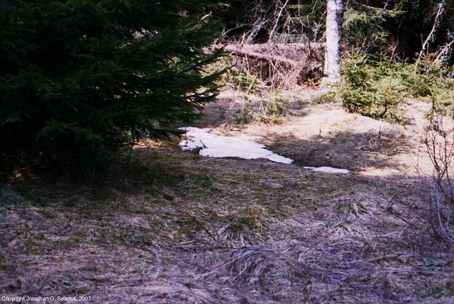 Plesne Jezero, Picture 9 (Actually of a snowdrift), Sumavsky Narodni Pamatka, Bohemia(CZ), 2007