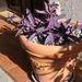 Blumentopf am Hauseingang in Calera