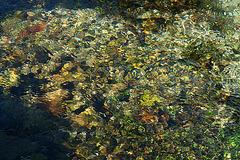 Das klare Wasser der Glonn