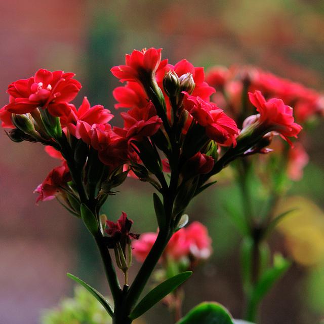 *flower*