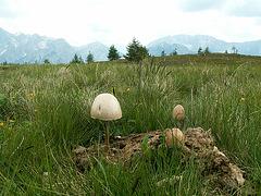 Sch..Pilze 1.JPG