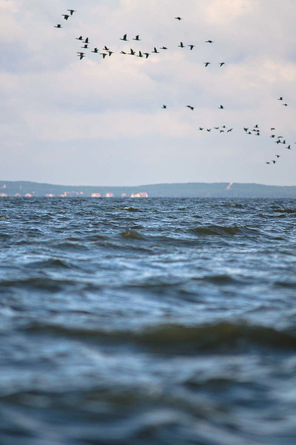 WasserNehrungVögel