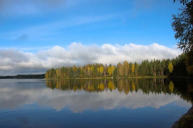Herbstseewald