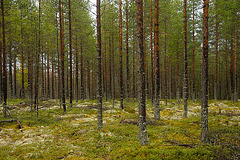 Wald ohne Ende