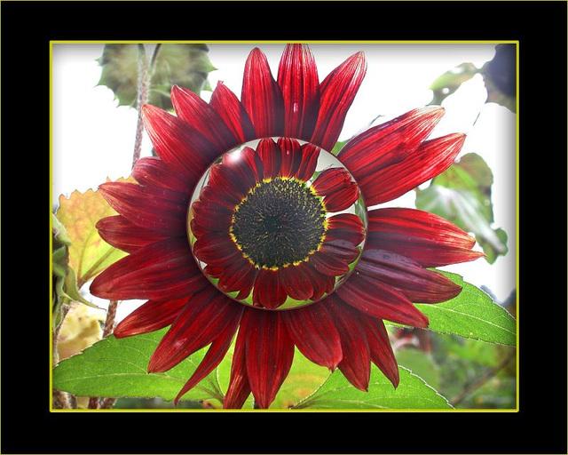 Sunflower  Spielerei