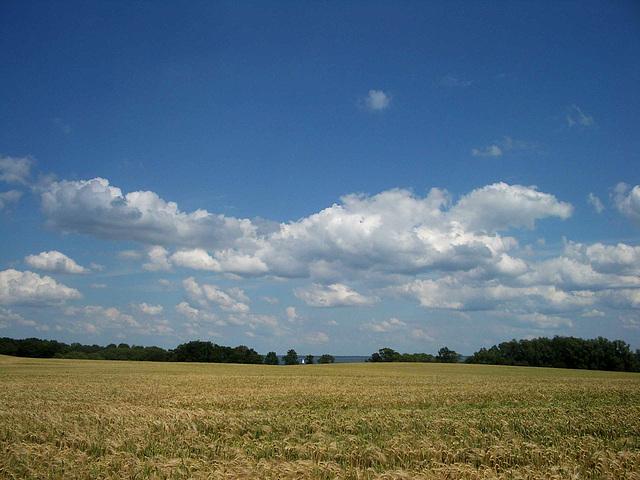 Blick übers Kornfeld auf die Müritz