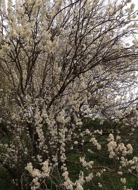primavera a Can Coll -3-