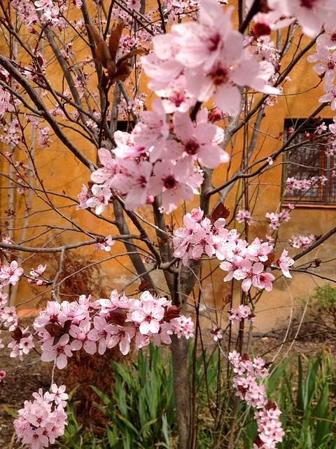 primavera a Can Coll -1-
