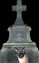 Grave of Pauly - the humantoilet- trained siamcat