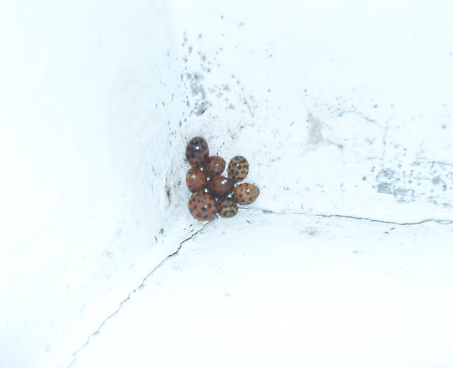 Ladybug - camping