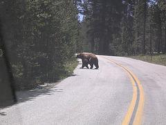 Grizzlymama...