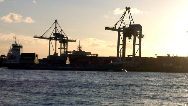 Cranes in dawn