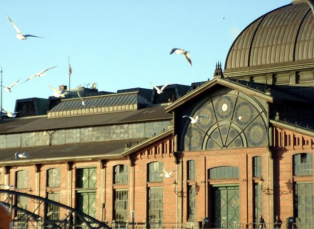 Fischauktionshalle with Gulls