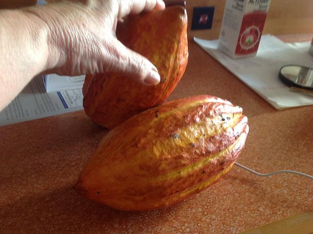 Cabosse ....Fèves de cacao