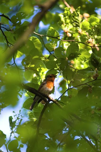 Robin, Again