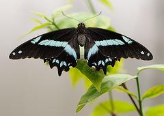 Macro sur un papillon...