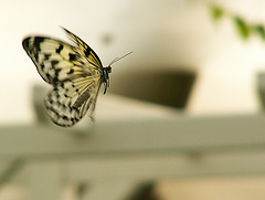 Schmetterling Detail 1
