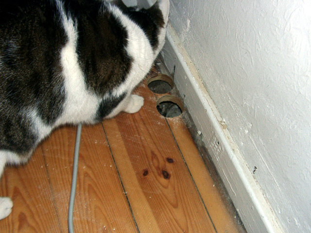 Rocky inspect the holes