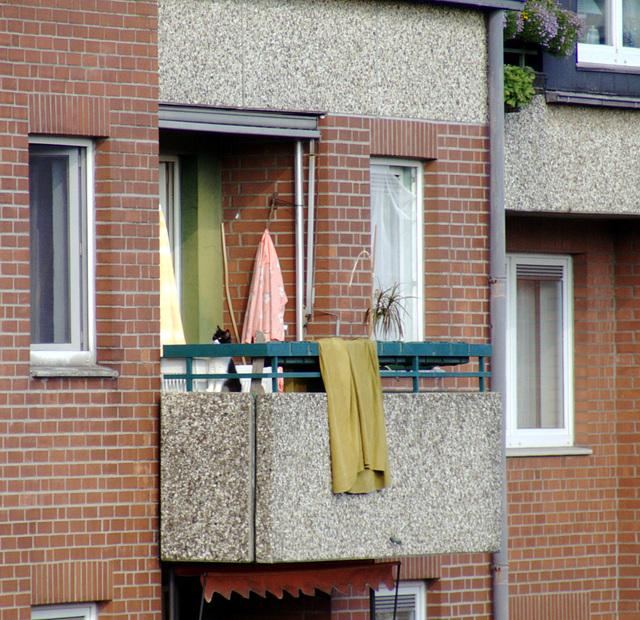 Katze auf ungesichertem Balkon