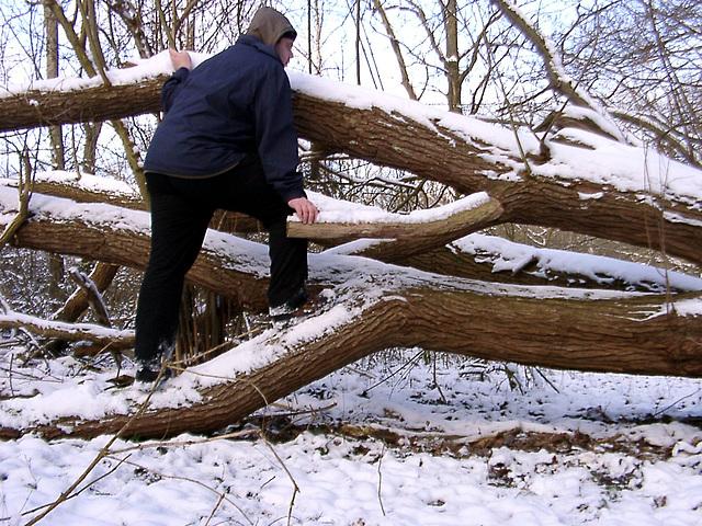 Climbing on dead wood