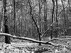 Brushwood in winter