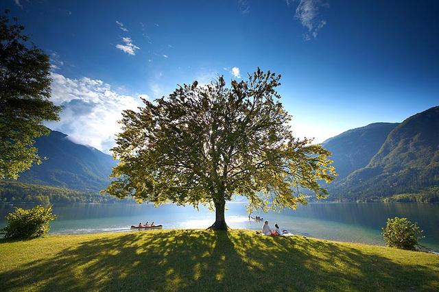 Lago de Bohinj