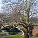 Kersten- Miles- Brücke with old tree