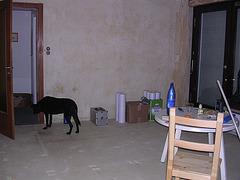 Der Hund verlässt das sinkende..... - 5. Tag