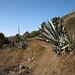 IMG 1275 Las Hayas - Weg durch das Tal