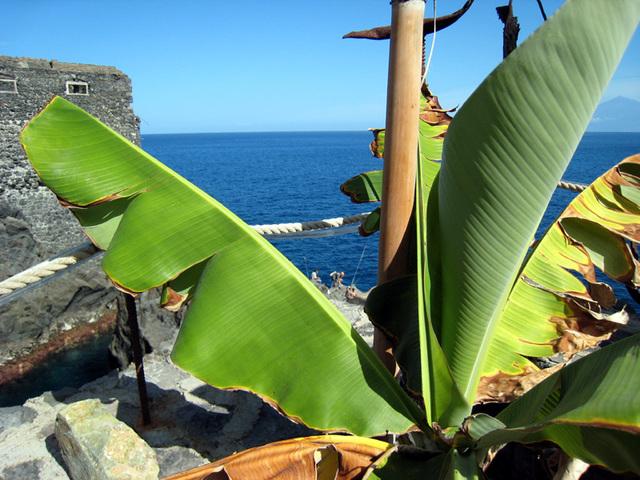 IMG 1402 durch Bananenblätter