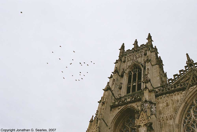 York Minster Pigeons, York, North Yorkshire, England(UK), 2007