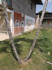 Coca-cola y gallina yoti / Poule yoti & Coca-cola / Coca-cola & yoti hen.