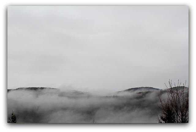 Brouillard  (6)