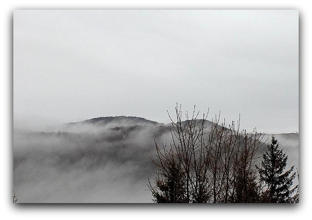 Brouillard  (2)