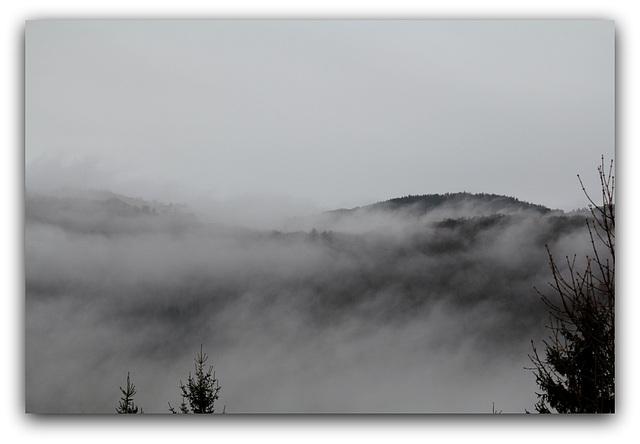 Brouillard  (7)